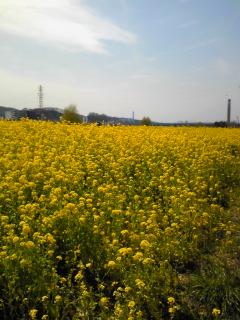 多摩川散歩中